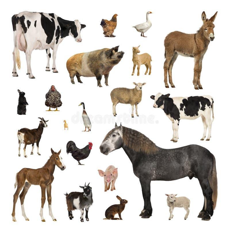 Colección grande de animal del campo en diversa posición imagen de archivo