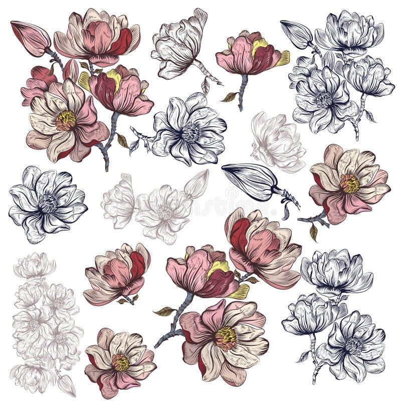 Colección grande de flores de la magnolia del vector para el diseño libre illustration