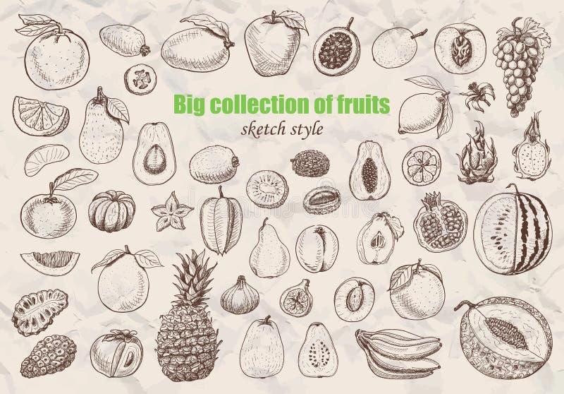 Colección grande de frutas en estilo del bosquejo ilustración del vector