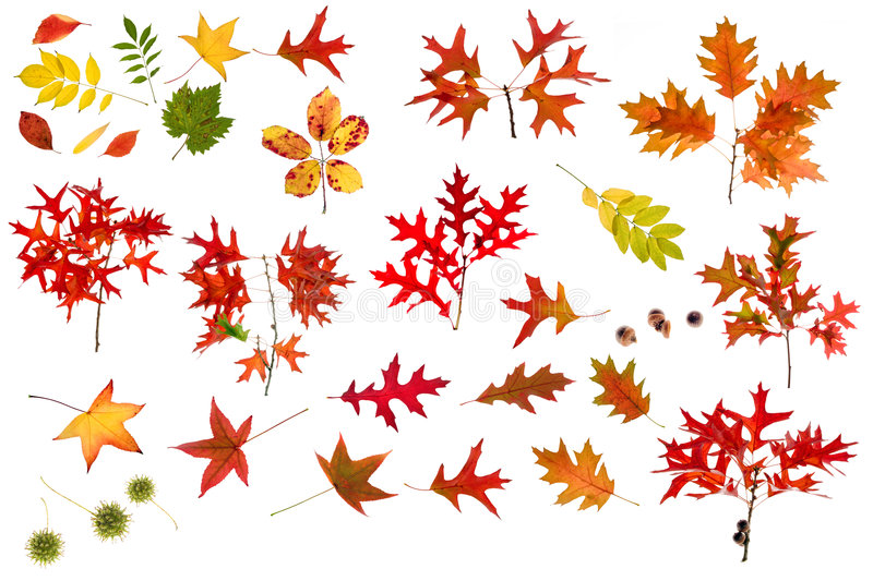 Colección grande de las hojas de otoño fotos de archivo