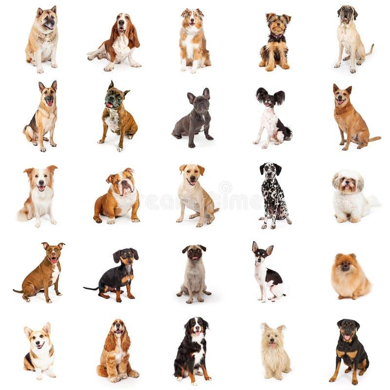 Colección grande de perros comunes de la raza fotos de archivo