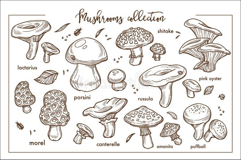 Colección madura comestible y no comestible del monocromo de los mashrooms del bosque ilustración del vector