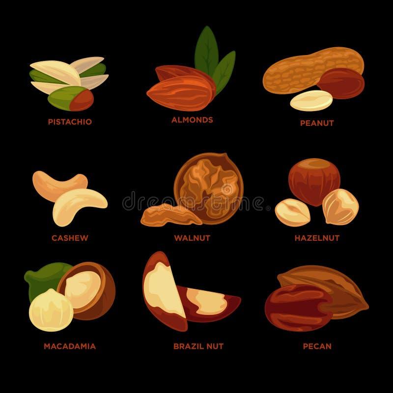 Colección Nuts con nombres en fondo negro stock de ilustración