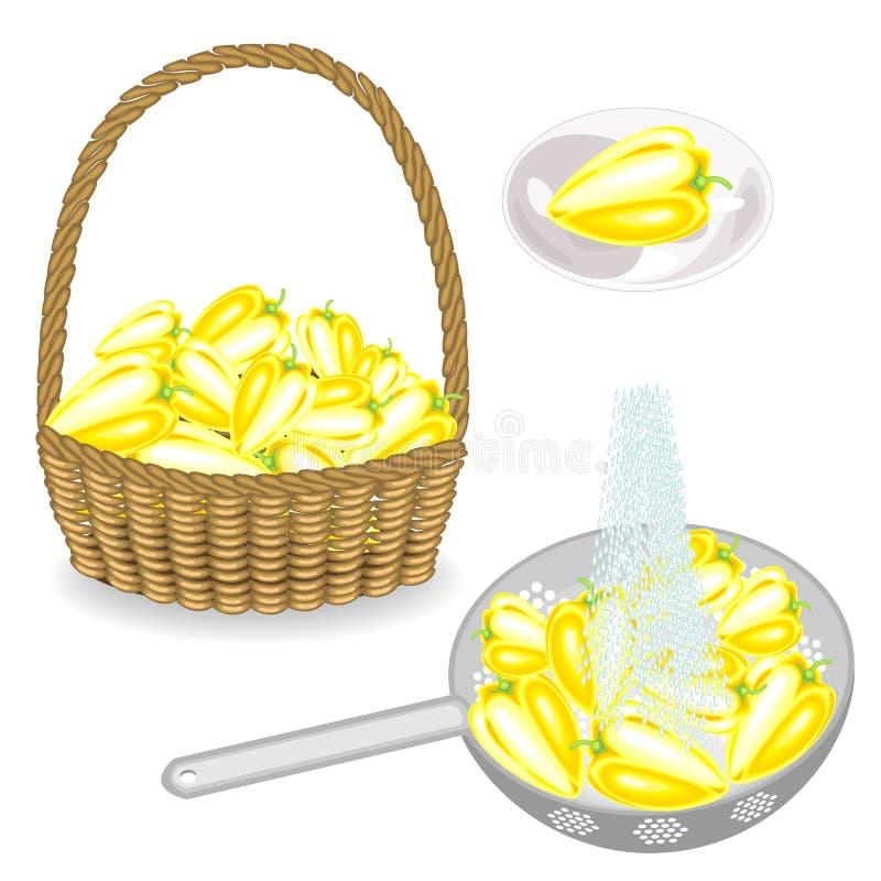 colecci?n Cosecha de la pimienta en una cesta Las verduras se lavan en un colador debajo de la agua corriente Pimienta en una pla libre illustration