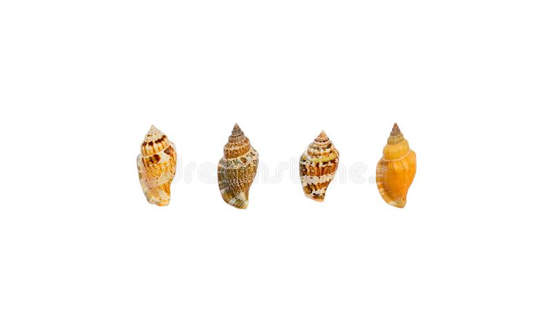 Colecci?n de c?scaras del mar aisladas en el fondo blanco foto de archivo