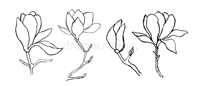 Colecci?n floral de la bot?nica del bosquejo Dibujos de la flor de la magnolia Sola l?nea arte moderna, contorno est?tico Blanco  stock de ilustración