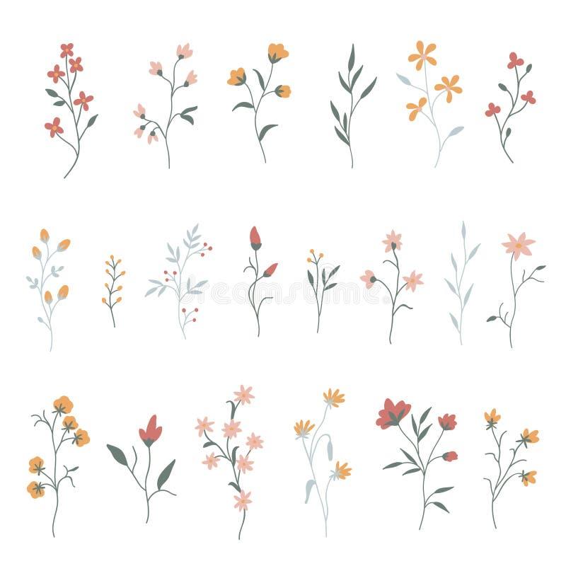 Colecci?n floral dibujada mano ilustración del vector