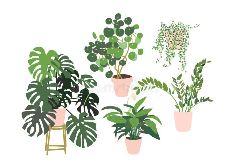 Colecci?n Potted de las plantas succulents y plantas de la casa ilustración del vector