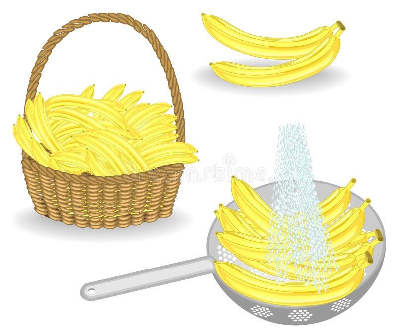 colecci?n Una cosecha abundante de plátanos Frutas frescas en una cesta y lavadas debajo de la agua corriente La fruta es muy sab libre illustration
