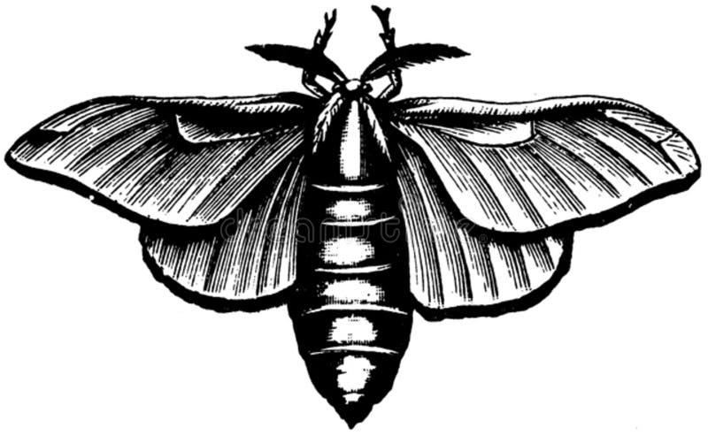 Coleoptere-001 Free Public Domain Cc0 Image