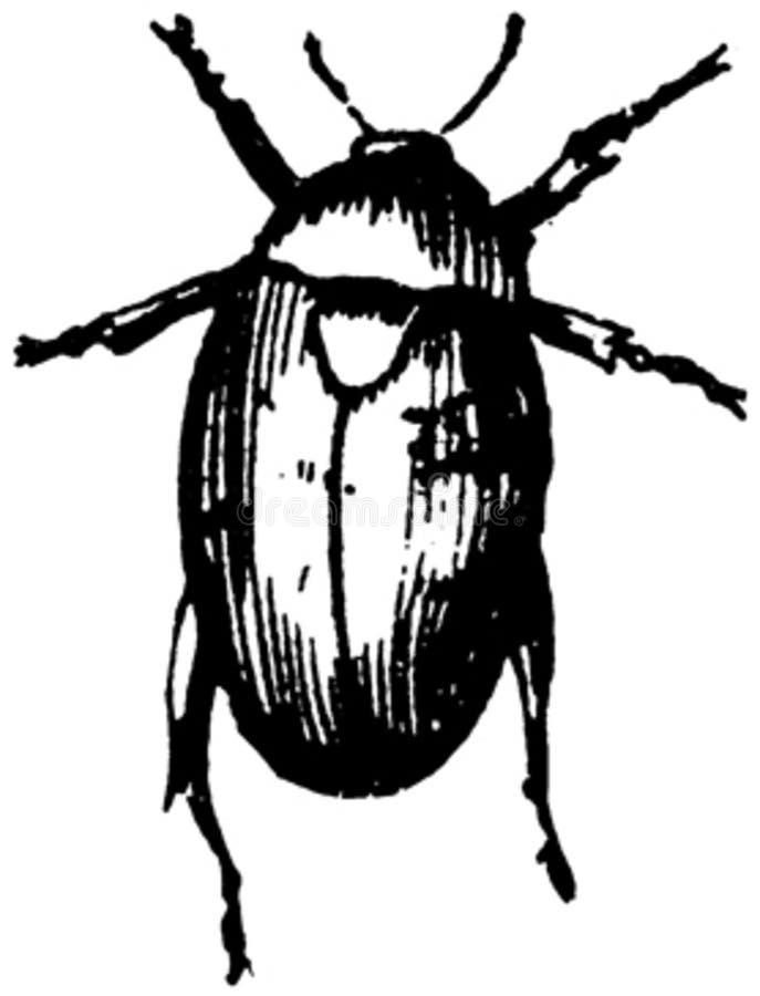 Coleoptere-005 Free Public Domain Cc0 Image