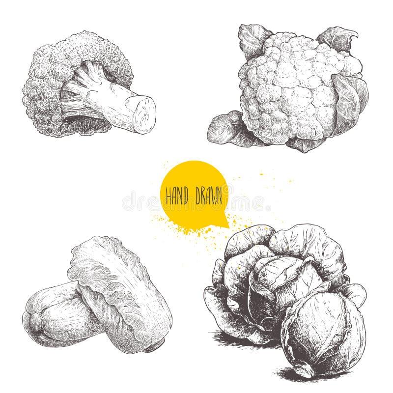 Coles dibujadas mano del estilo del bosquejo fijadas Cabezas de las coles, coliflor, bróculi y col de China stock de ilustración