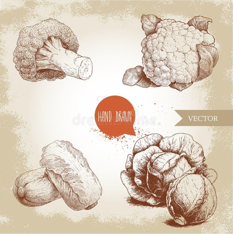 Coles dibujadas mano del estilo del bosquejo fijadas Composiciones de PE-tsai de las cabezas, de la coliflor, del bróculi y de la ilustración del vector