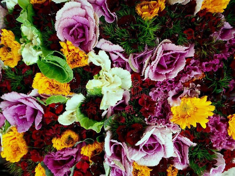 Coles ornamentales vivas inusuales con las flores coloridas imagen de archivo libre de regalías