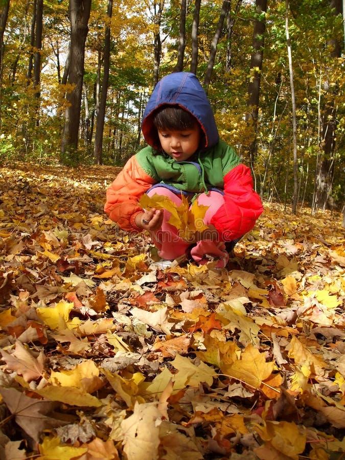 Coletando as folhas de outono imagens de stock royalty free