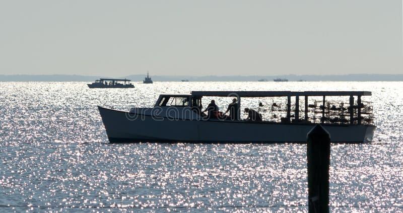 Coletando caranguejos no louro de Chesapeake fotografia de stock