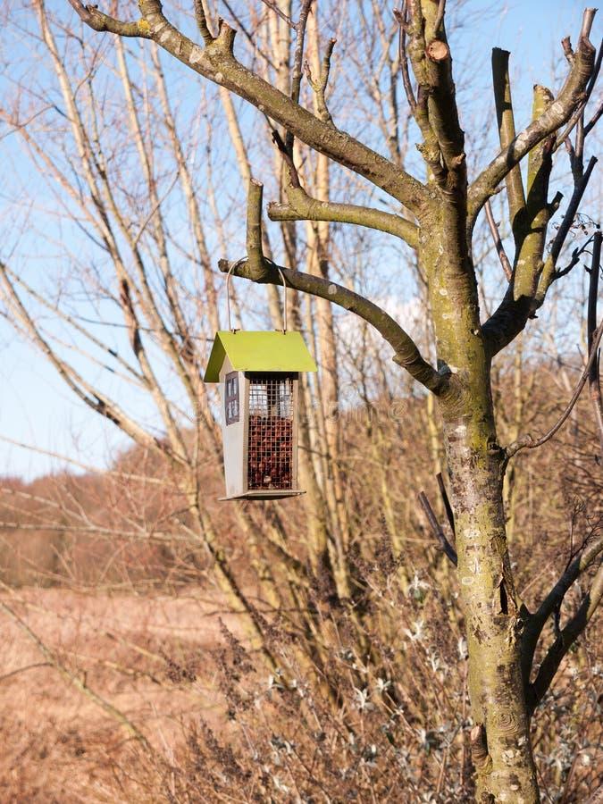 colgante cerca encima de alimentador de madera del pájaro de la vertiente el la primavera del árbol foto de archivo