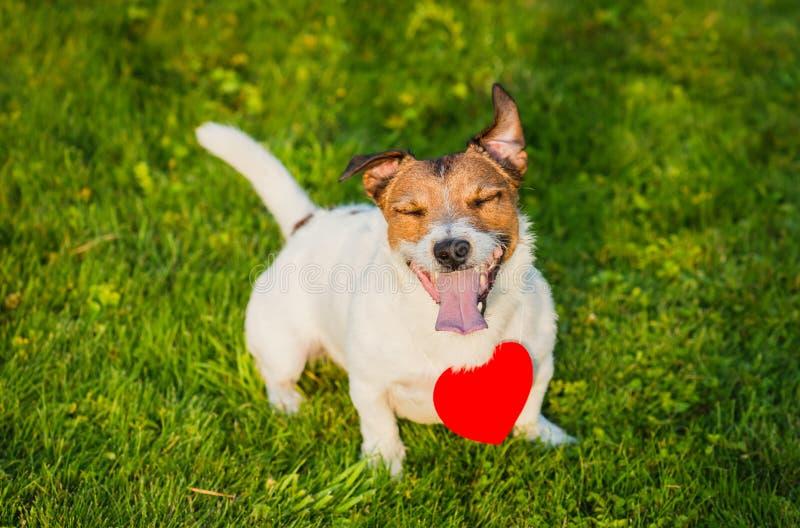 Colgante en forma de corazón que lleva del perro feliz en hierba verde fotografía de archivo