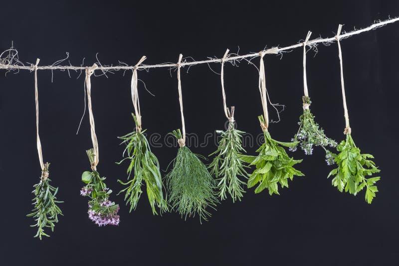 Colgante fresco de las hierbas aislado en fondo negro fotos de archivo libres de regalías