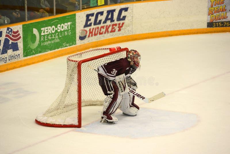 Colgate Goalie #31 i NCAA-hockeylek fotografering för bildbyråer