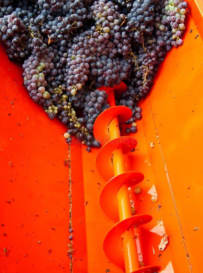 Colheita 02 da uva imagem de stock