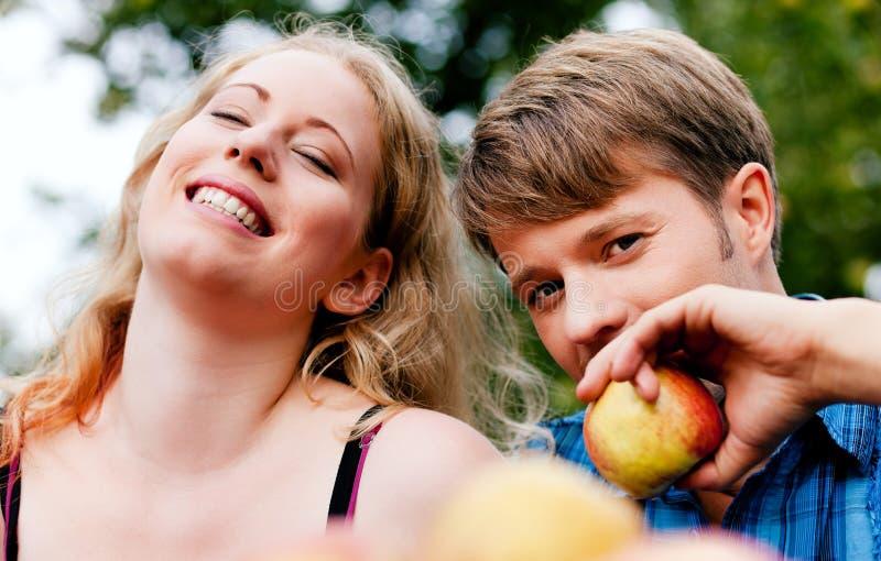 Colheita - comendo maçãs fotografia de stock