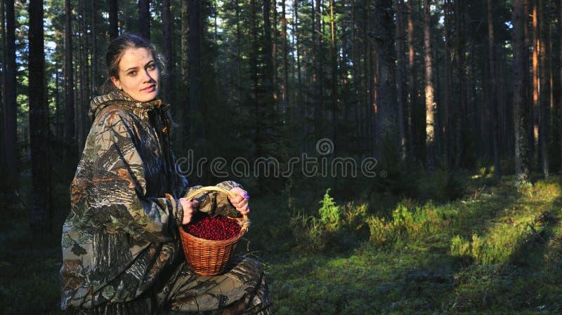 Colheita Cowberrys da mulher nova. imagem de stock