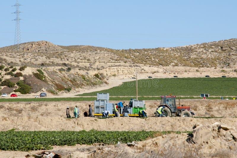 Colheita da colheita - Espanha imagens de stock royalty free