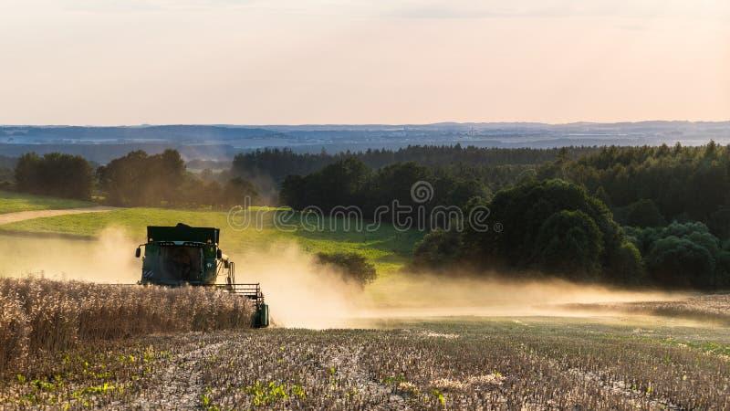 Colheita da colza por uma liga na paisagem do verão Napus do Brassica imagens de stock royalty free