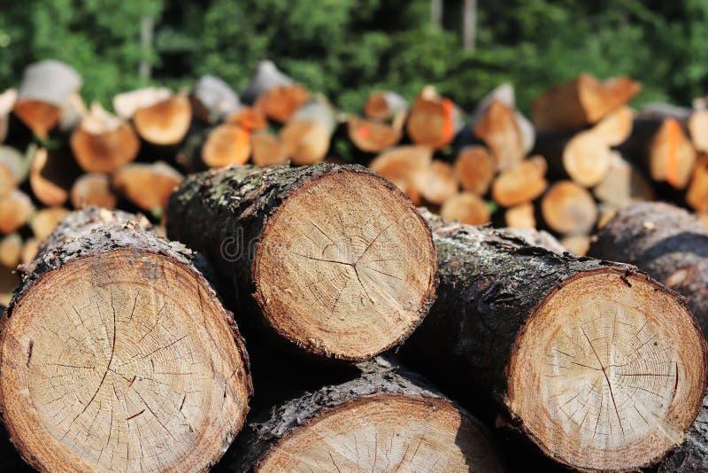 A colheita da madeira na floresta os logs vistos encontra-se no woodpile Aquecimento dos locais na vila Desflorestamento industri imagem de stock