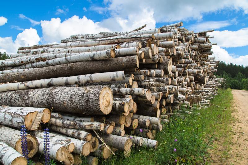 Colheita da madeira no campo na temporada de verão foto de stock