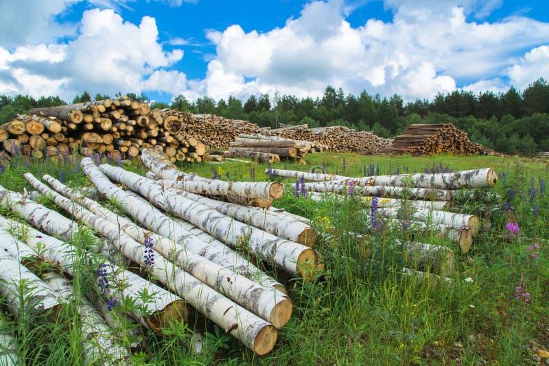 Colheita da madeira no campo na temporada de verão imagem de stock royalty free