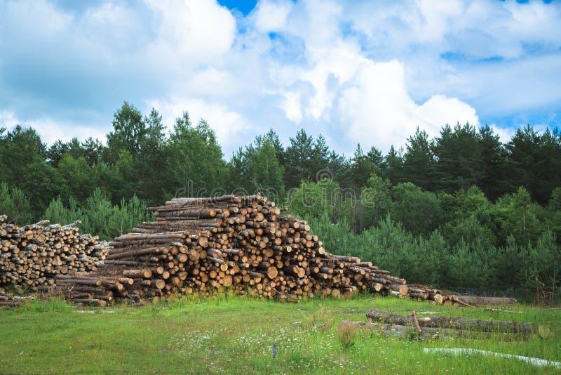 Colheita da madeira no campo na temporada de verão fotos de stock royalty free