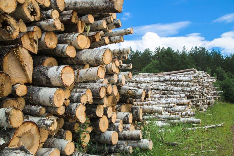 Colheita da madeira no campo na temporada de verão imagens de stock royalty free