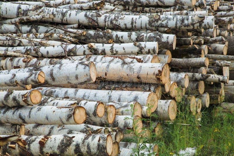 Colheita da madeira no campo na temporada de verão fotos de stock