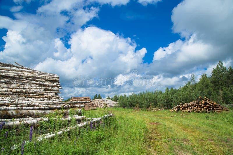 Colheita da madeira no campo na temporada de verão foto de stock royalty free