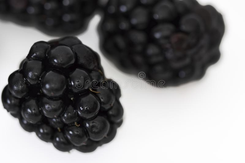 Colheita de Blackberry em branco imagens de stock royalty free