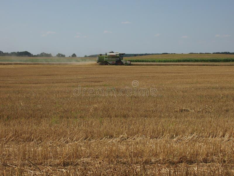 Colheita de colheitas do trigo: ceifeira de liga no campo fotos de stock royalty free