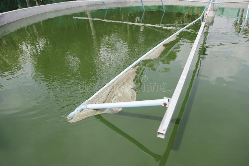 Colheita de Spirulina fotos de stock