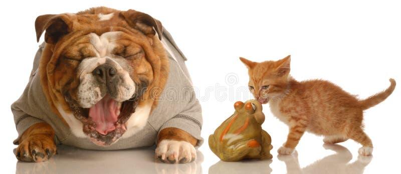 Colheita do cão em um gatinho fotografia de stock royalty free