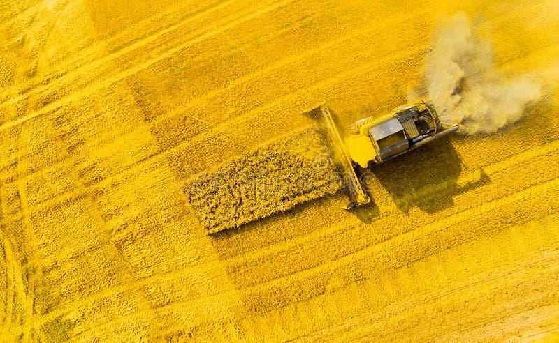 Colheita do campo de trigo  imagem de stock royalty free