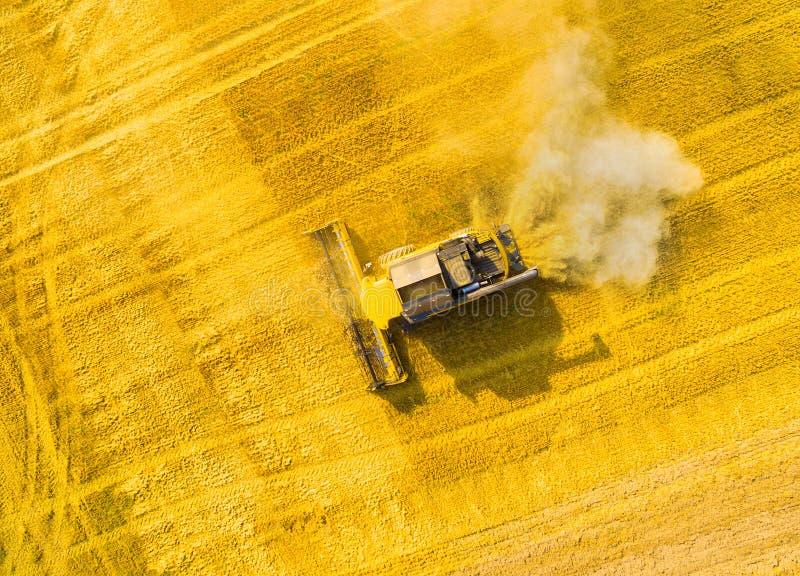Colheita do campo de trigo Vista aérea à ceifeira de liga imagem de stock