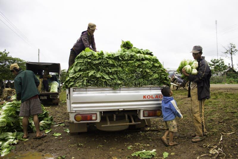 A colheita do fazendeiro dos vegetais ocorre cada semana do ano imagens de stock