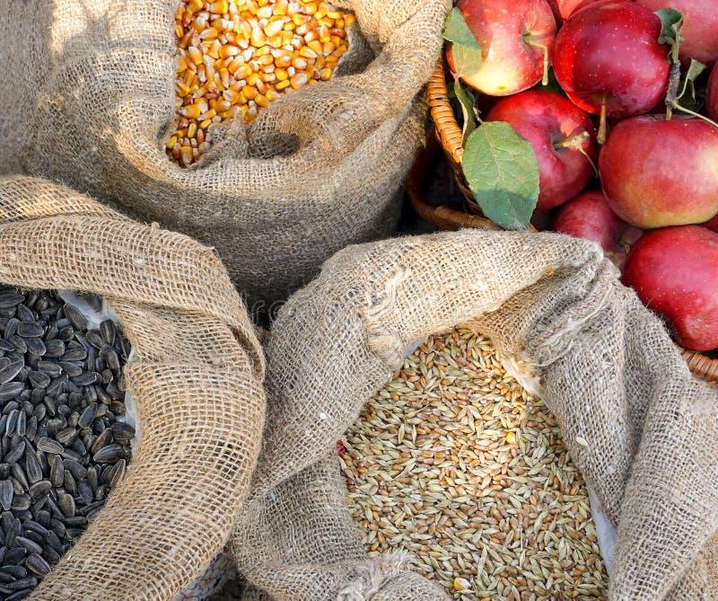 A colheita do fazendeiro, sementes de girassol, maçãs, milho, trigo imagens de stock
