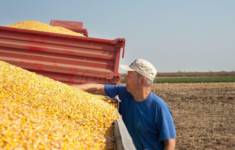 Colheita do fazendeiro a tempo fotos de stock royalty free