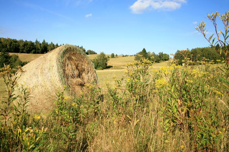 Colheita do feno no prado imagens de stock