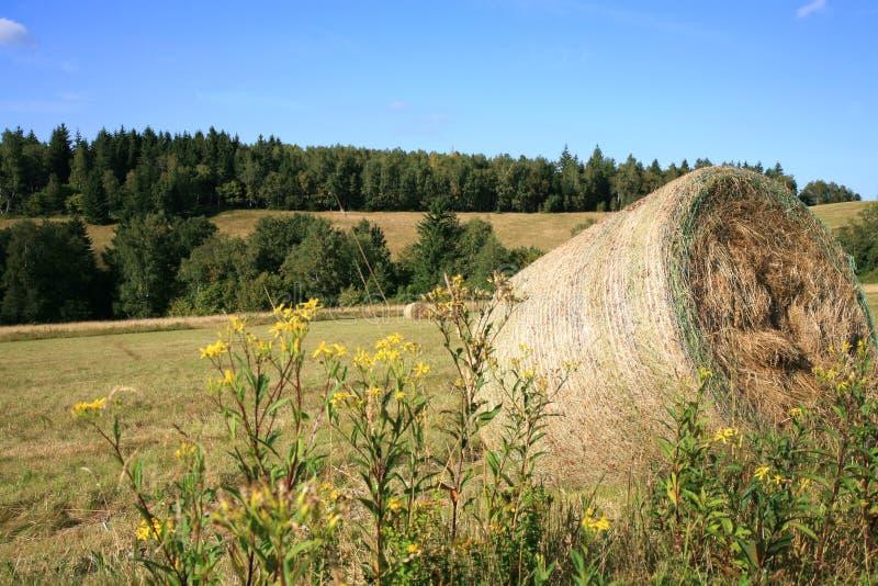 Colheita do feno no prado fotografia de stock
