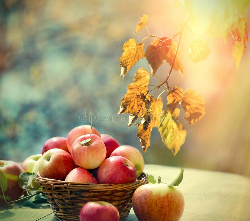 Colheita do outono, alimento saudável, maçã saudável na cesta de vime na tabela foto de stock royalty free