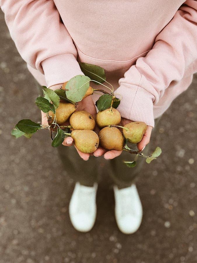 Colheita do outono nas mãos das meninas imagem de stock
