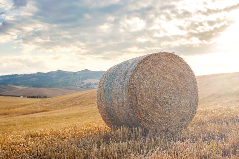 A colheita do verão no Tuscan coloca, Itália foto de stock royalty free